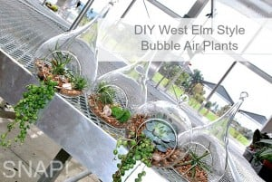 West Elm Style Bubble Air Plants