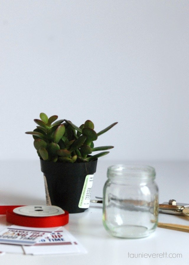 This sweet little succulent is a great Fourth of July hostess gift, but I like it just for home decor too.