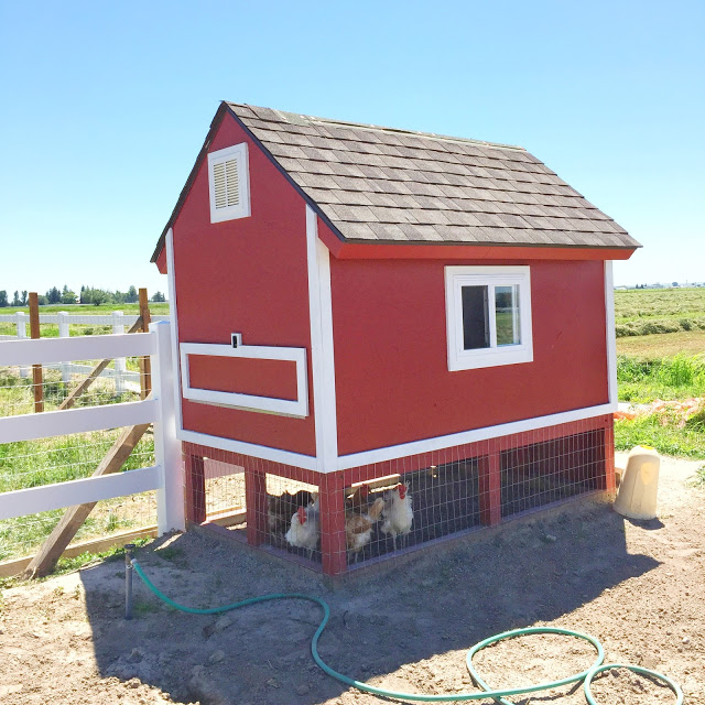 How to build a chicken coop with pallets and plywood.