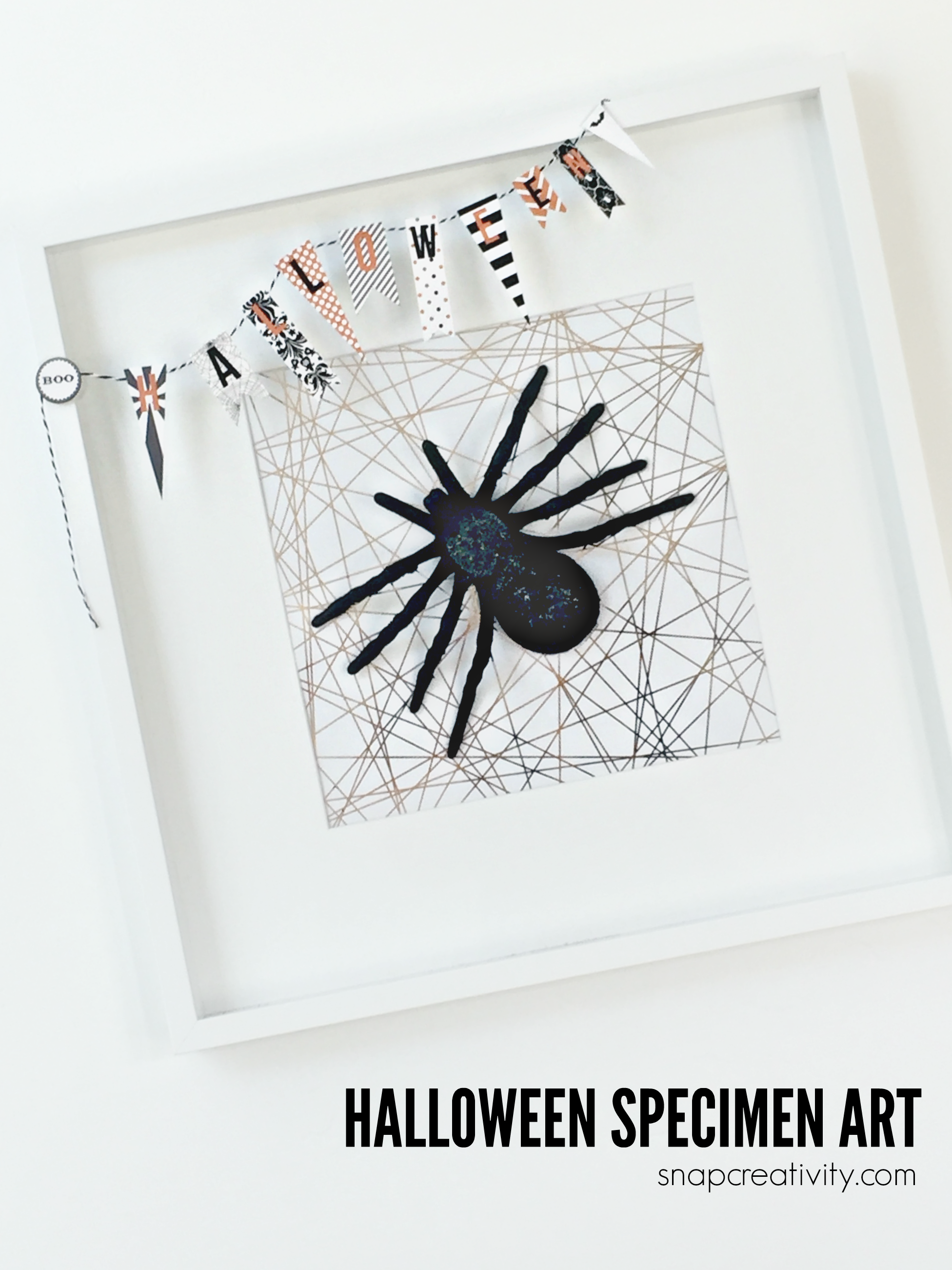 Create this fun Halloween spider specimen art. Easy to create in less than 15 minutes at home!